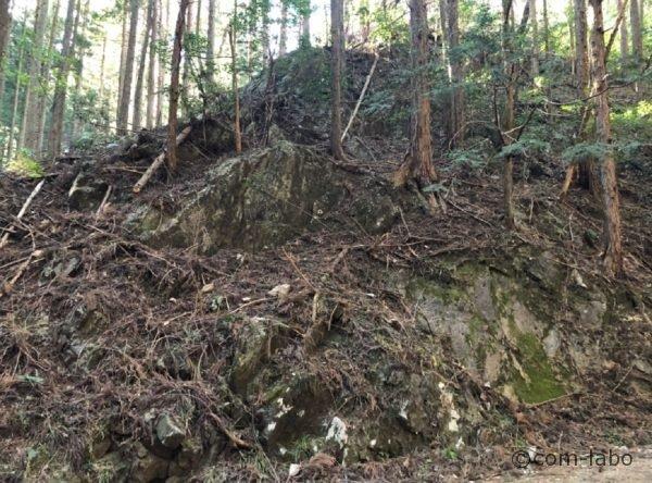 道の両脇の岩盤には、杉の木の根が食い込み根付いている。