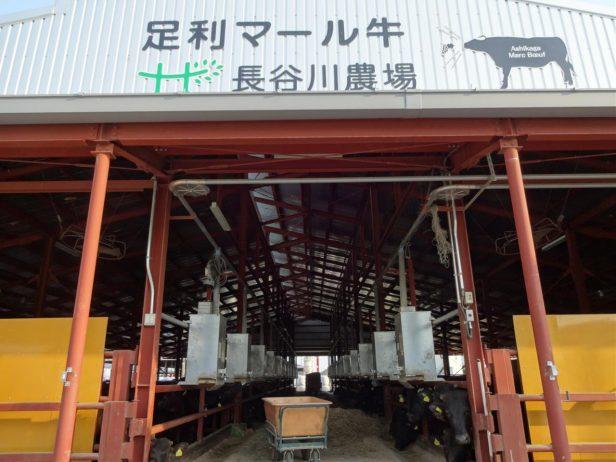 都内のレストランでも使われる、長谷川農場の「足利マール牛」